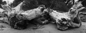 Driftwood-Black and White